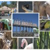 10 Reason's to Visit Los Angeles Zoo